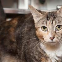 Adopt A Pet :: Jewel - Palm Springs, CA