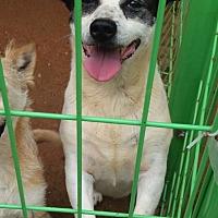 Adopt A Pet :: Oliver - Oakton, VA