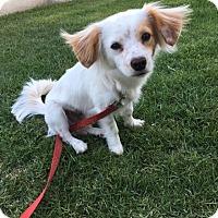 Adopt A Pet :: BO - Courtesy - Los Angeles, CA