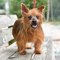Adopt A Pet :: Stone - Newburgh, IN