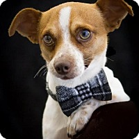 Adopt A Pet :: Roscoe - Phelan, CA