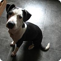 Adopt A Pet :: Gwen - Davenport, IA