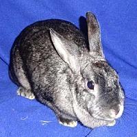 Adopt A Pet :: Anna - Woburn, MA