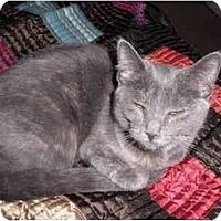 Adopt A Pet :: Bennett - Warren, MI