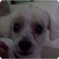 Adopt A Pet :: Phillip - Allentown, PA
