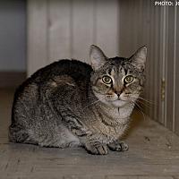 Adopt A Pet :: Vanessa - Medina, OH