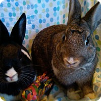Adopt A Pet :: Alexander and Ronan - Williston, FL