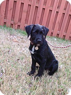 Labrador Retriever/Mixed Breed (Medium) Mix Puppy for adoption in Marietta, Georgia - Bernadette