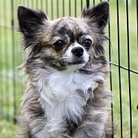 Adopt A Pet :: COURTESY POST-Bendi - Picayune, MS