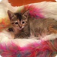 Adopt A Pet :: Elle - Santa Fe, TX