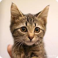 Adopt A Pet :: Kensley - Bedford, VA