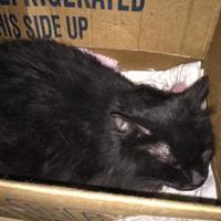 Adopt A Pet :: Phantom - Salem, OH