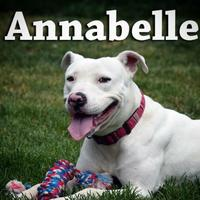Adopt A Pet :: Annabelle - Heber City, UT