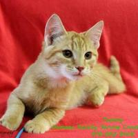 Adopt A Pet :: TOMMY - Bucyrus, OH
