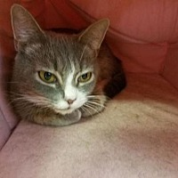 Adopt A Pet :: Claudia - Asheville, NC
