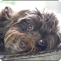 Adopt A Pet :: Ella-adoption pending - Mississauga, ON