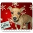Photo 1 - Chihuahua Dog for adoption in San Clemente, California - LOLA