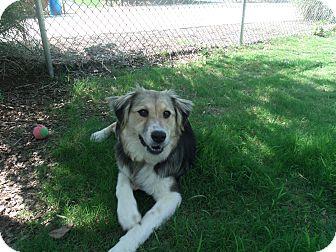 German Shepherd Dog Mix Dog for adoption in Gadsden, Alabama - Wynter