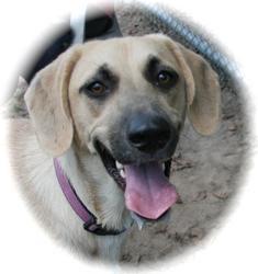 Black Mouth Cur Mix Dog for adoption in Lufkin, Texas - Goldie