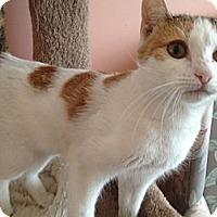 Adopt A Pet :: Peggy - East Hanover, NJ