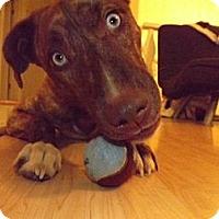 Adopt A Pet :: Mister - Wasilla, AK