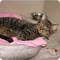 Adopt A Pet :: Tony - Arlington, VA