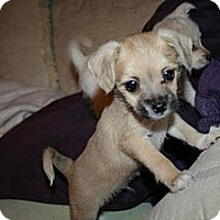 Adopt A Pet :: Travis - Westfield, IN