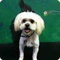Adopt A Pet :: Kirby - Goleta, CA