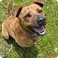 Adopt A Pet :: Max - Bakersville, NC