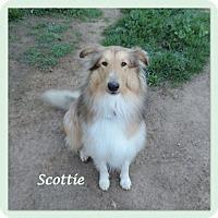 Adopt A Pet :: Scottie - San Diego, CA