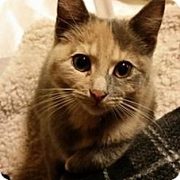 Adopt A Pet :: SPECKLES - Ridgewood, NY