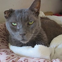 Adopt A Pet :: Sandee - Coos Bay, OR