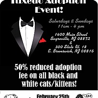 Adopt A Pet :: Tuxedo adoption event! - East Brunswick, NJ