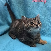 Adopt A Pet :: Meeny - Harrisville, WV