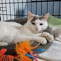 Adopt A Pet :: David - Jackson, MO
