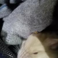 Adopt A Pet :: Babs - Galveston, TX