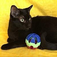 Adopt A Pet :: Zane - Green Bay, WI