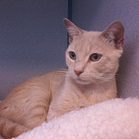 Adopt A Pet :: Reuben- Love Bug - Arlington, VA
