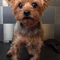 Adopt A Pet :: Benji - McKinney, TX