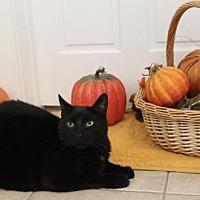 Adopt A Pet :: Buckwheat - Thibodaux, LA