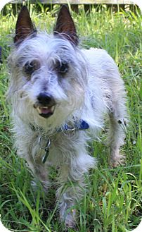 Terrier (Unknown Type, Small) Mix Dog for adoption in Forked River, New Jersey - Sophia