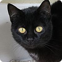 Adopt A Pet :: Misha - Grand Rapids, MI