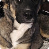 Adopt A Pet :: Brie - Centerpoint, IN