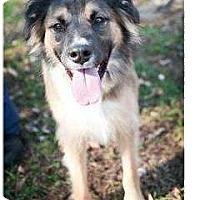Adopt A Pet :: Sebastian - Alexandria, VA