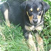 Adopt A Pet :: Stony - Bel Air, MD
