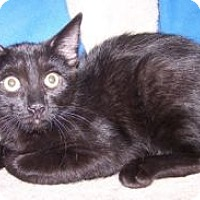 Adopt A Pet :: K-Twinkle5-Jack - Colorado Springs, CO