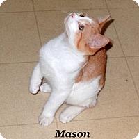 Adopt A Pet :: Mason - Bentonville, AR