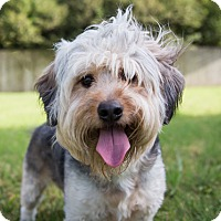 Adopt A Pet :: Thumper - Austin, TX