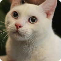Adopt A Pet :: Carlton - Canoga Park, CA