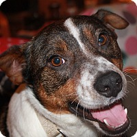 Adopt A Pet :: Bartley - North Olmsted, OH
